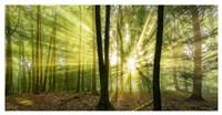 Nebelstimmung mit Sonne im Wald Fine-Art Print