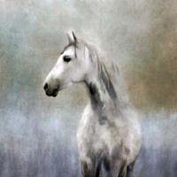Misty Grey Dappled Horse Fine-Art Print