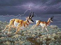 Thunder and lightning Fine-Art Print