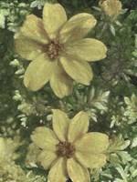 A Pair of Pretty Painted Petals Fine-Art Print
