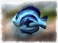 Another Single Angel Fish Fine-Art Print