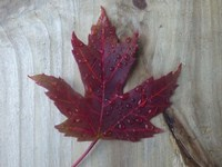 Canadian Impressions Fine-Art Print
