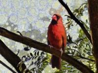 Cardinal Knowledge Fine-Art Print