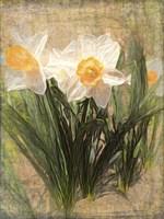 Daffy Dames Fine-Art Print