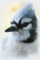Buzz Two Point O - Portrait Of A Blue Jay Fine-Art Print
