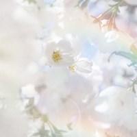 Apple Blossoms 03 Fine-Art Print