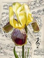 Background Iris 2 Fine-Art Print