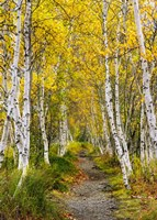 Walk in the Woods - Vertical Fine-Art Print