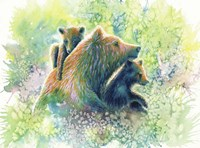 Mother Grizzly Bear Fine-Art Print