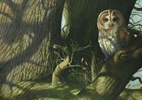 Tawny Owl Fine-Art Print