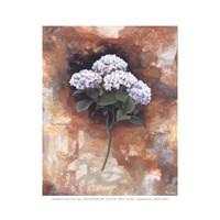 Hydrangea Royal Fine-Art Print