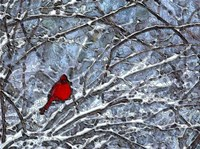 Cardinal in the Snow Fine-Art Print