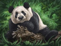 Peaceful Panda Fine-Art Print
