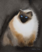 Birman Cat Fine-Art Print