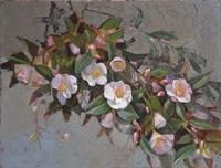 Camellia Quintessence Fine-Art Print