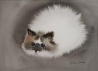 Fluffy White Cat Fine-Art Print