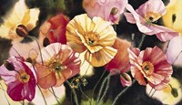 Iceland Poppies Fine-Art Print