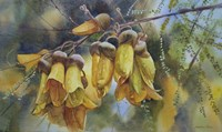 Kowhai Tree Blossoms I Fine-Art Print