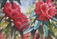 Red Rhodo Fine-Art Print