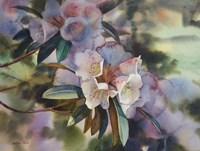 White Rhododendron in Dapped Light Fine-Art Print