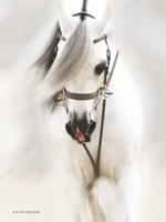 Dream Horse Fine-Art Print