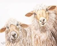 Ba Ba White Sheep Fine-Art Print