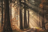 Fresh Autumn Light Fine-Art Print