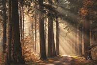 Fresh Autumn Light Fine-Art Print