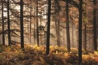 Fern Forest Fine-Art Print