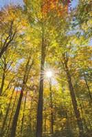 Autumn Foliage Sunburst III Fine-Art Print
