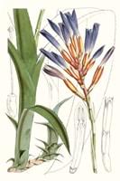 Tropical Plants I Fine-Art Print
