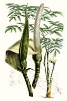 Tropical Plants IV Fine-Art Print