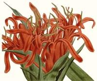Striking Coral Botanicals I Fine-Art Print