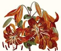 Striking Coral Botanicals II Fine-Art Print