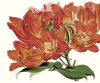 Striking Coral Botanicals III Fine-Art Print