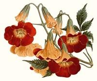 Striking Coral Botanicals IV Fine-Art Print