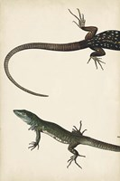 Lizard Diptych I Fine-Art Print