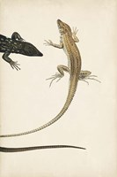Lizard Diptych II Fine-Art Print