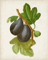 Antique Fruit VI Fine-Art Print