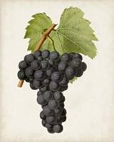 Antique Fruit VIII Fine-Art Print