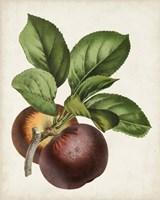 Antique Fruit IX Fine-Art Print
