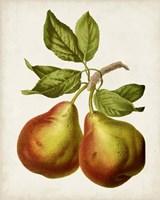 Antique Fruit XI Fine-Art Print
