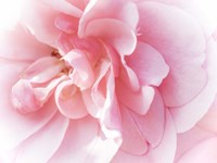Pretty Pink Blooms IV Fine-Art Print