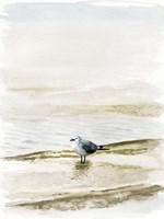 Coastal Gull II Fine-Art Print
