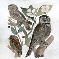 Traditional Owls II Fine-Art Print