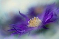 Gold & Purple in the Mist I Fine-Art Print