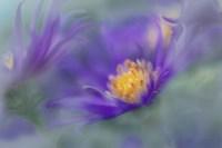 Gold & Purple in the Mist II Fine-Art Print