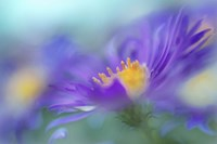 Gold & Purple in the Mist IV Fine-Art Print