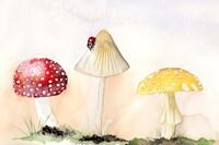 Faerie Mushrooms I Fine-Art Print