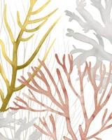 Desert Coral II Fine-Art Print